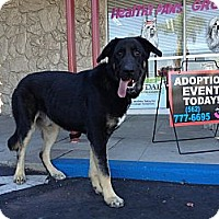 Adopt A Pet :: Bear - Whittier, CA