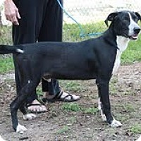 Adopt A Pet :: Alvin ($200 adoption fee) - Staunton, VA