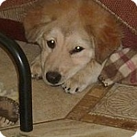 Adopt A Pet :: NICKY - Raleigh, NC