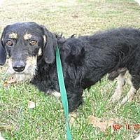 Adopt A Pet :: Apache - Stilwell, OK