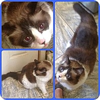 Adopt A Pet :: Manticore