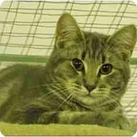 Adopt A Pet :: Leoplod - Mission, BC