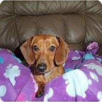 Adopt A Pet :: Noodle - Kokomo, IN