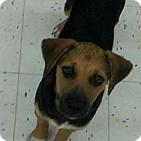 Adopt A Pet :: Hudson - Beaumont, TX