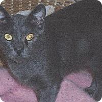 Adopt A Pet :: Lyn - El Cajon, CA
