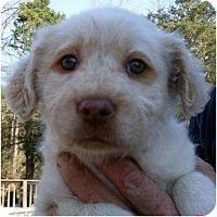 Adopt A Pet :: Arin - Harrison, AR
