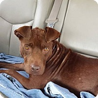 Adopt A Pet :: Lady - Midway, KY
