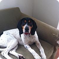 Adopt A Pet :: Tazi - Shelter Island, NY