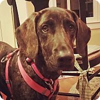Adopt A Pet :: Jean - Boston, MA