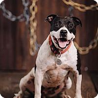 Adopt A Pet :: Nadia - Portland, OR