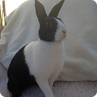 Adopt A Pet :: Felicity - Watauga, TX