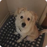 Adopt A Pet :: M&M - Rancho Cucamonga, CA