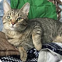 Adopt A Pet :: Maui - Toronto, ON
