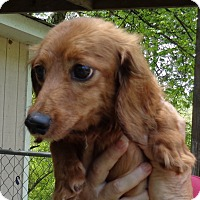 Adopt A Pet :: Lucy - Crump, TN