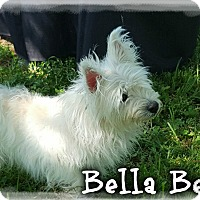 Adopt A Pet :: Bella Bea & Muffy (Pom-dc) - Hagerstown, MD