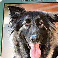 Adopt A Pet :: JACK VON JENGO - Los Angeles, CA