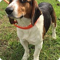 Adopt A Pet :: Titus 2 - Savannah, GA