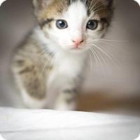 Adopt A Pet :: COSMO - Conroe, TX
