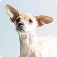 Adopt A Pet :: Peanut - Sunnyvale, CA