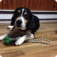 Adopt A Pet :: Jack - Freeport, ME