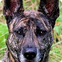 Adopt A Pet :: NIKKI(WOW!! SO SMART!!) - Wakefield, RI