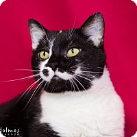 Adopt A Pet :: Ally - Colorado Springs, CO