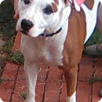 Adopt A Pet :: LOTUS - Lawton, OK