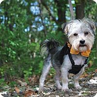 Adopt A Pet :: Jax - New Castle, PA