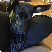 Adopt A Pet :: Lucy Lu - E. Greenwhich, RI