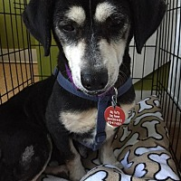 Beagle Mix Dog for adoption in Enfield, Connecticut - Kendra