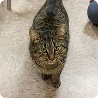 Adopt A Pet :: Daphne - Byron Center, MI