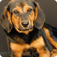 Adopt A Pet :: Olive - Newland, NC