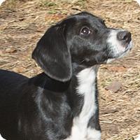 Adopt A Pet :: Butter - Elmwood Park, NJ