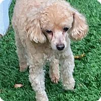Adopt A Pet :: Cass & Jaxx - Costa Mesa, CA
