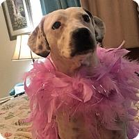 Adopt A Pet :: Dali - Port Charlotte, FL