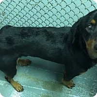 Adopt A Pet :: Spencer - Pomfret, CT