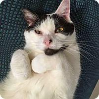 Adopt A Pet :: Petey - Troy, MI
