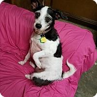 Adopt A Pet :: Lucy - Deer Park, TX