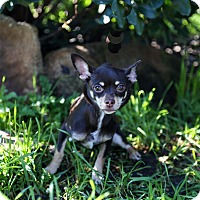 Adopt A Pet :: Minnie Mouse - Auburn, CA