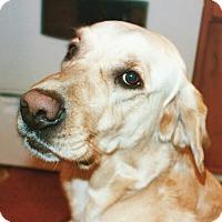 Adopt A Pet :: Chip - Omaha, NE