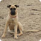 Adopt A Pet :: Choo Choo Charlie
