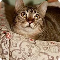 Adopt A Pet :: Sanari - Norman, OK
