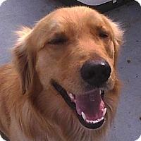 Adopt A Pet :: *Mulligan - PENDING - Westport, CT