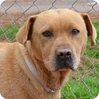 Adopt A Pet :: Ginger - Athens, GA