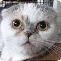 Adopt A Pet :: Micah - Davis, CA