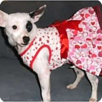 Adopt A Pet :: Tansy - Mooy, AL