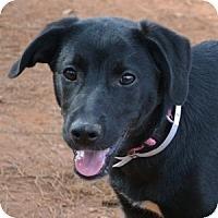 Adopt A Pet :: Valentine - Athens, GA