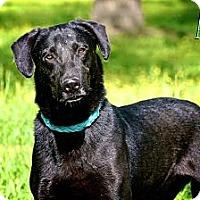 Adopt A Pet :: Asa - Flowery Branch, GA