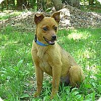Adopt A Pet :: Daphne - Mocksville, NC