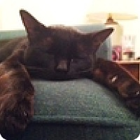 Adopt A Pet :: Maury - Vancouver, BC